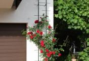rosenbogen_11