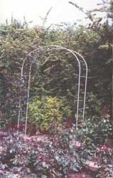 Rosenbogen 2