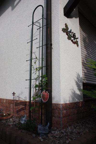 rosenbogen_20